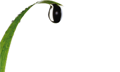 Irrigation Outaouais